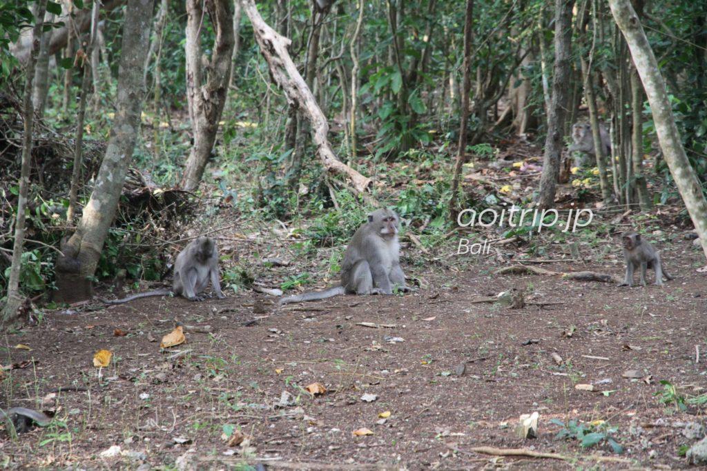 ウルワツ寺院 猿
