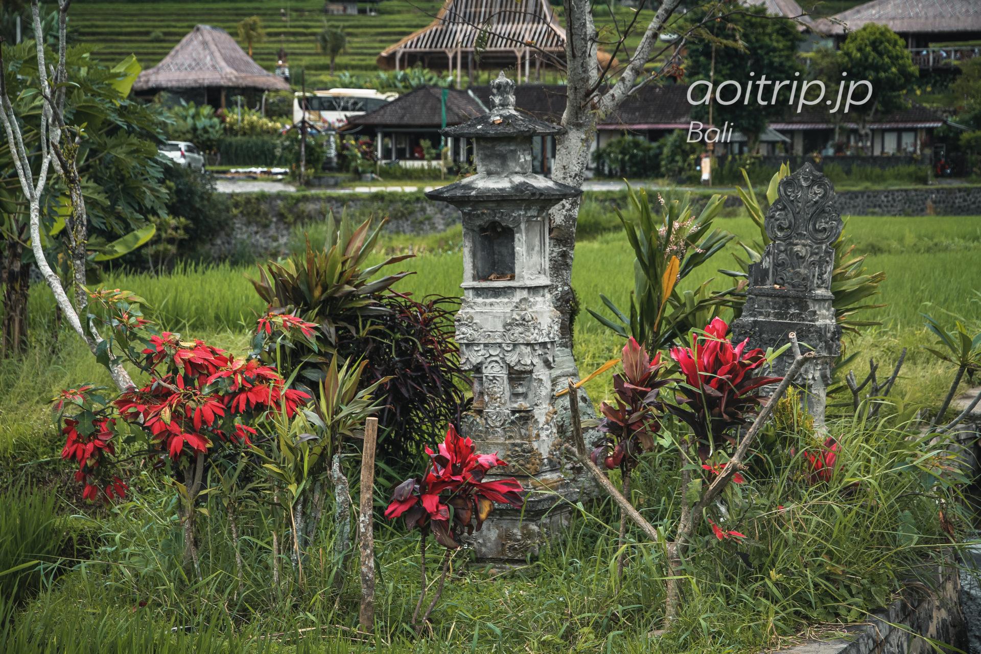 ジャティルイ棚田のライステラス|Jatiluwih Rice Terrace, Bali