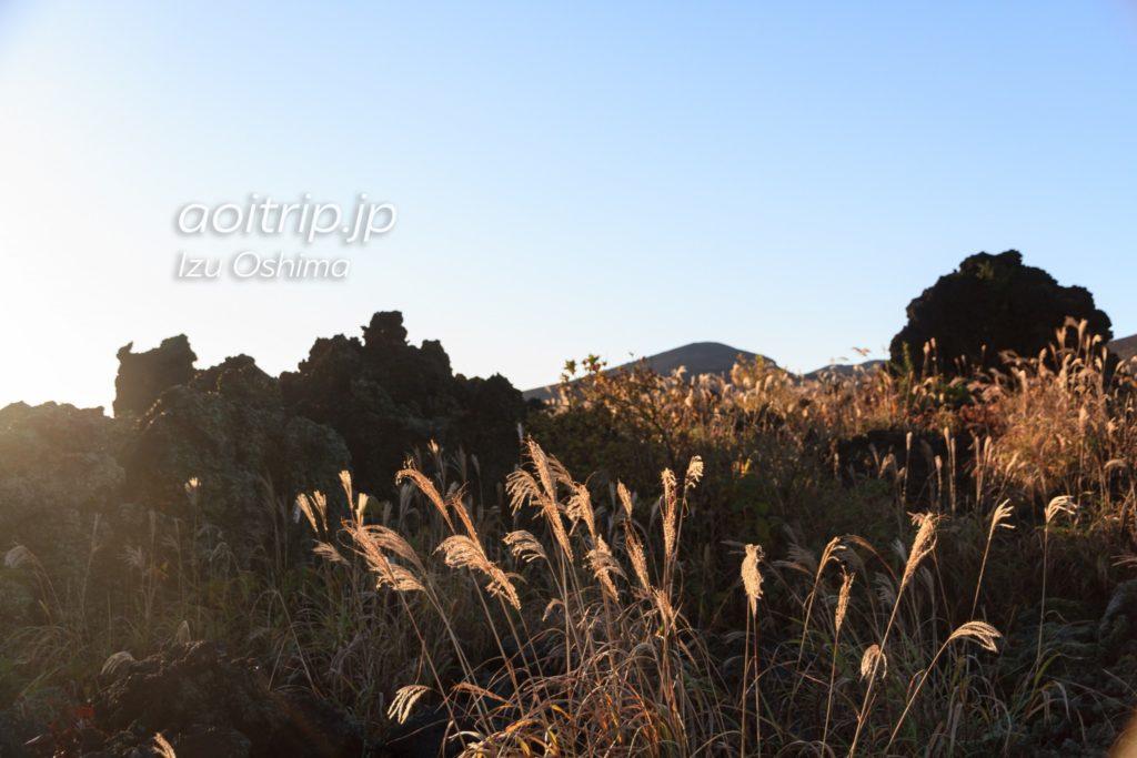 伊豆大島の溶岩