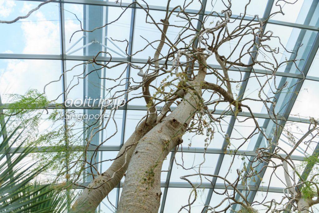 フラワードーム ゴーストツリー