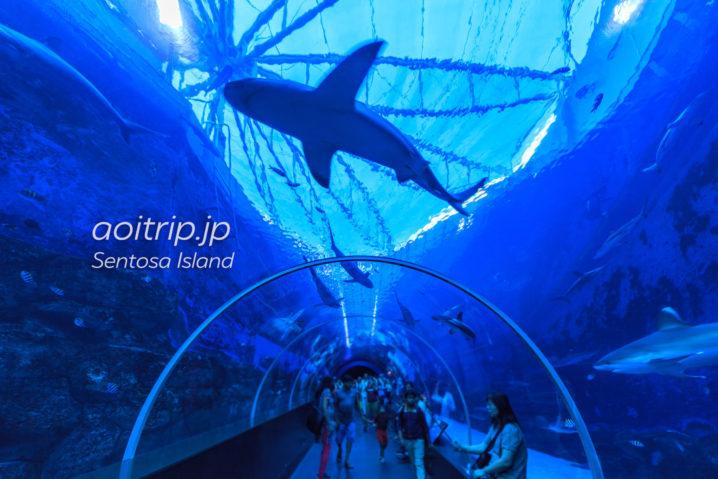 シーアクアリウム サメの海(Shark Seas)