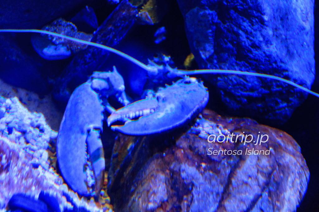 青いロブスター シンガポールのシーアクアリウム