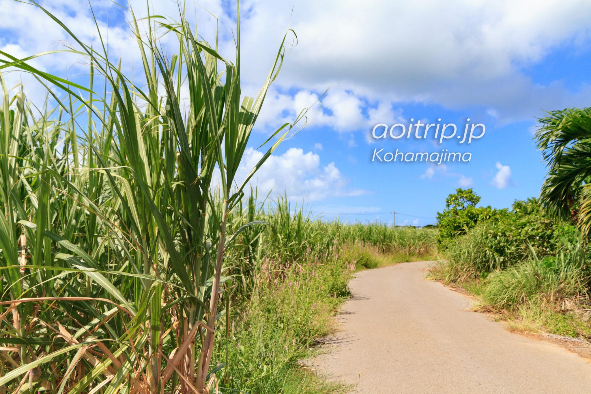 ちゅらさんの舞台、小浜島 観光の見どころ(沖縄・八重山諸島)