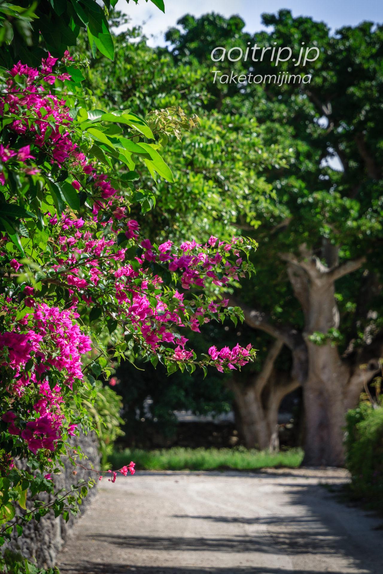 竹富島のブーケンビリア