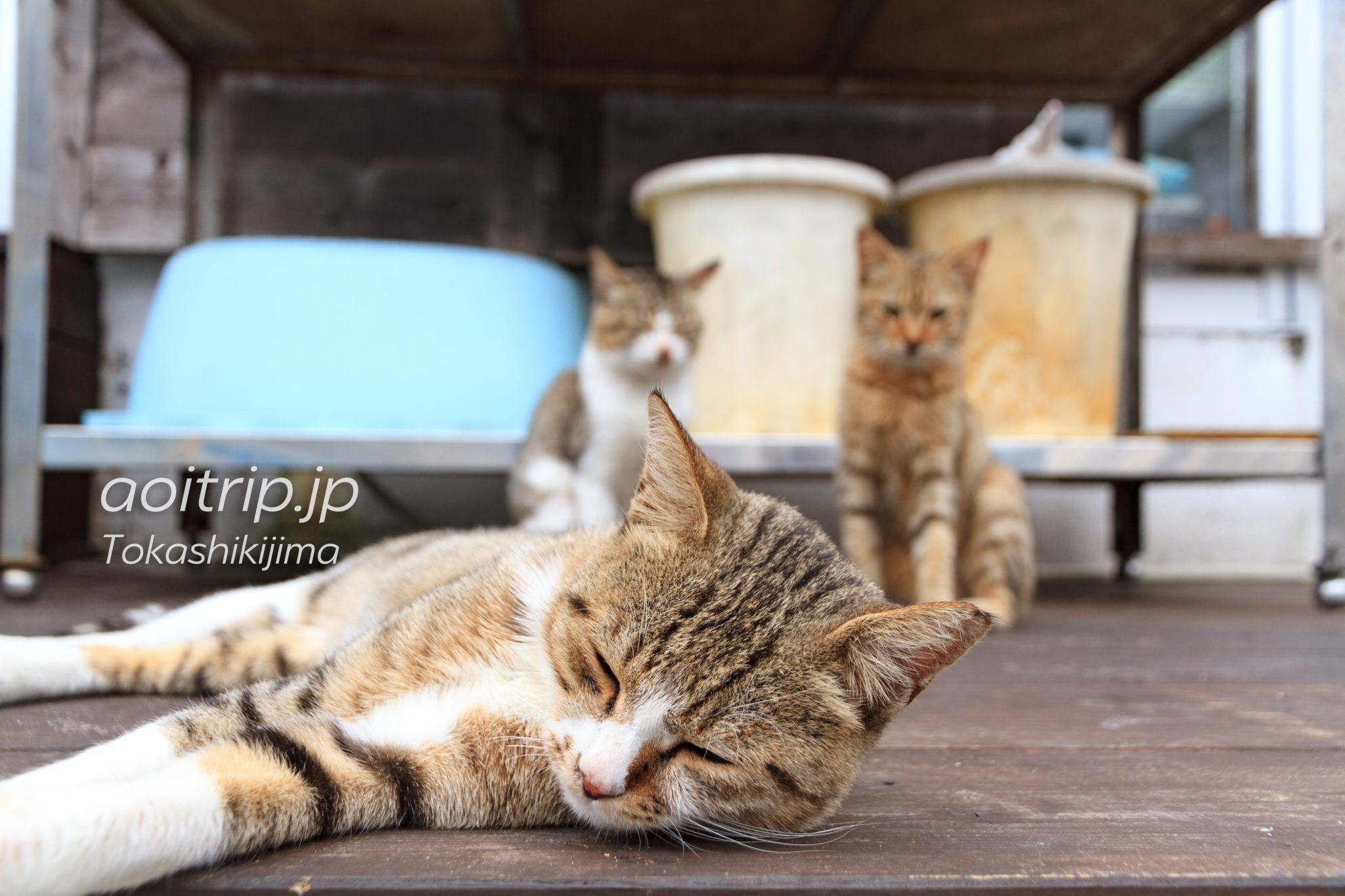 阿波連の猫