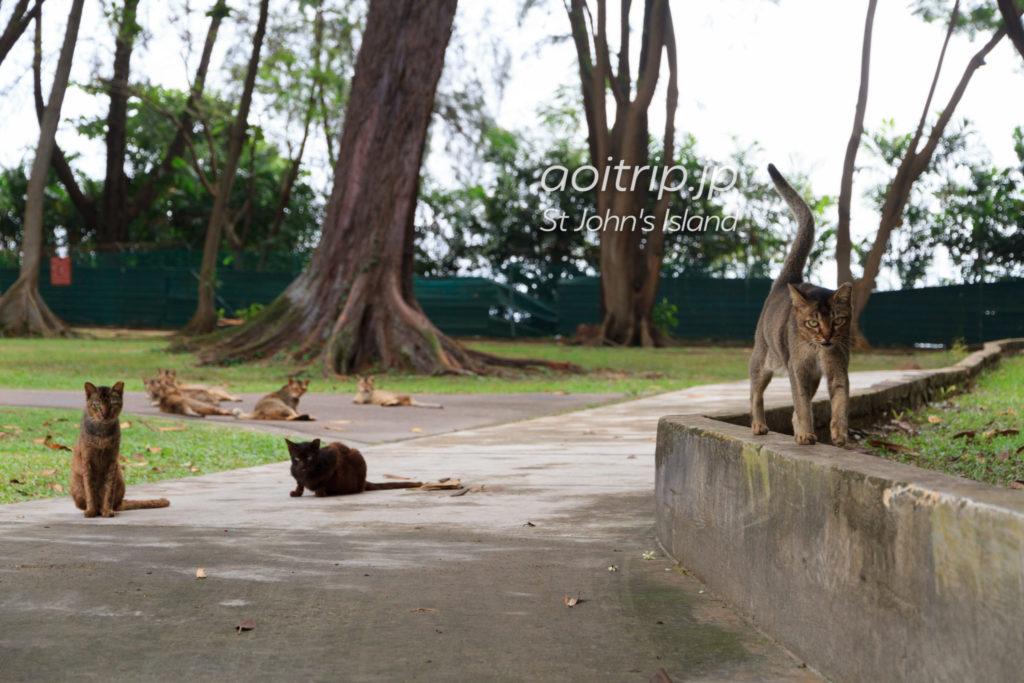 セントジョンズ島の猫