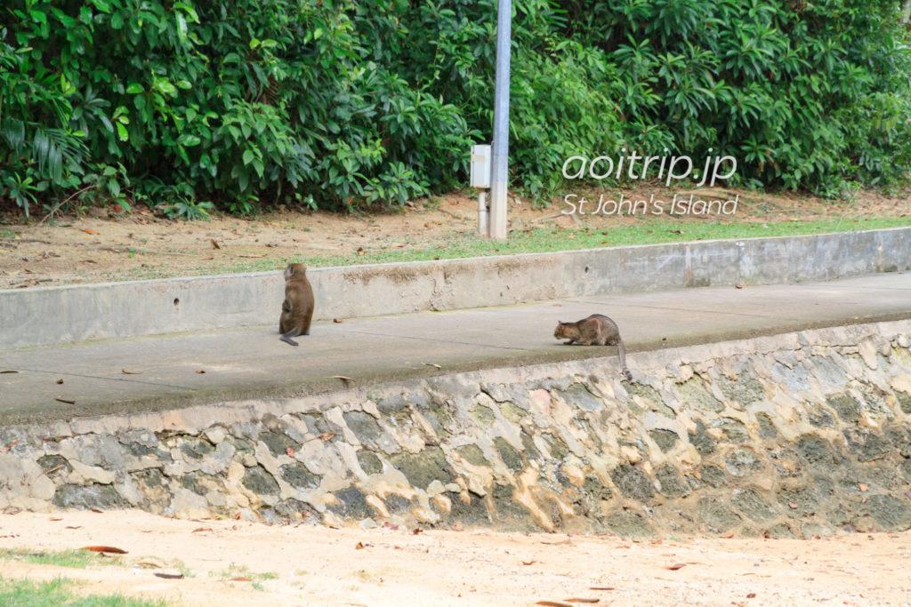 セントジョンズ島の猫と猿