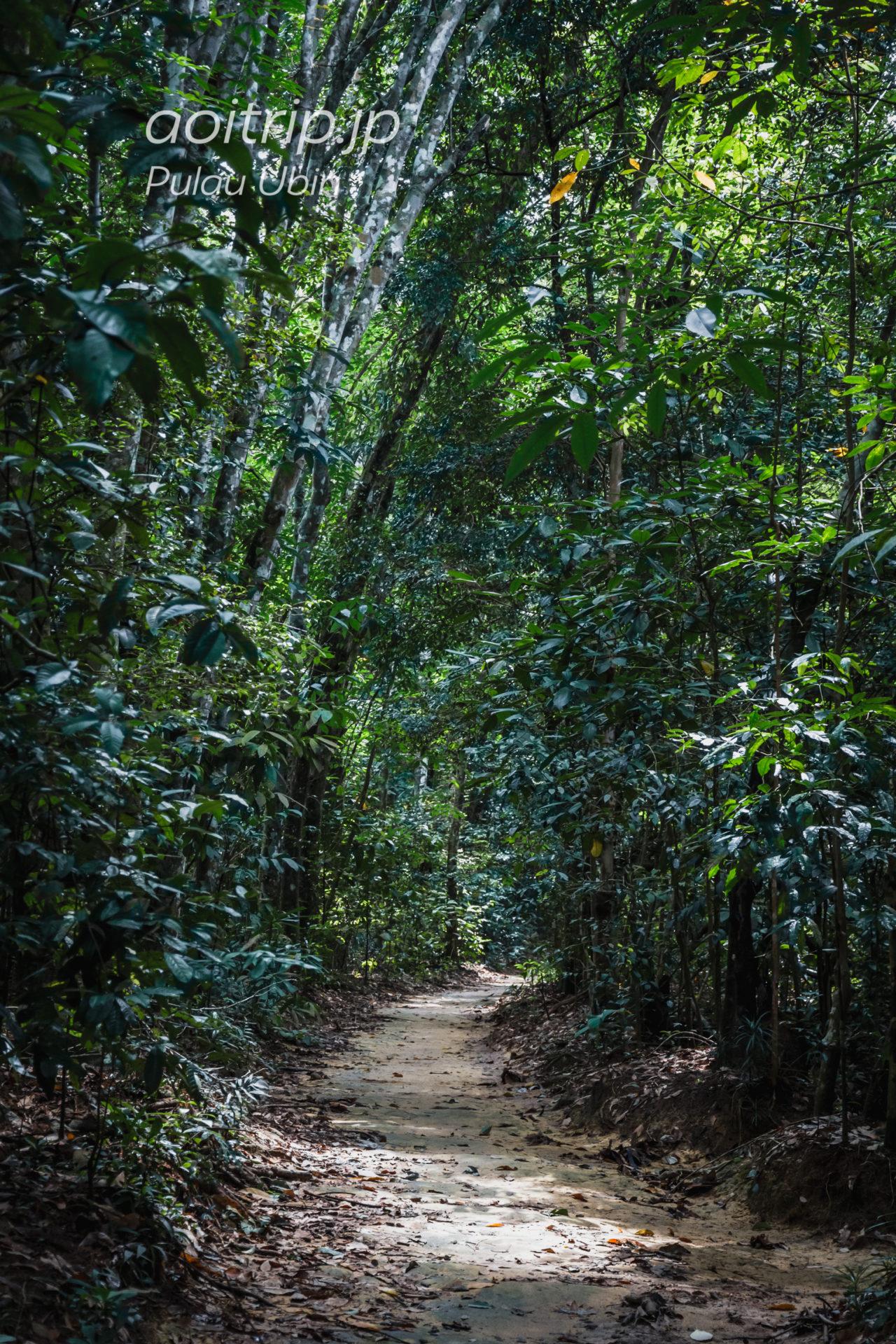 ウビン島のジャングル