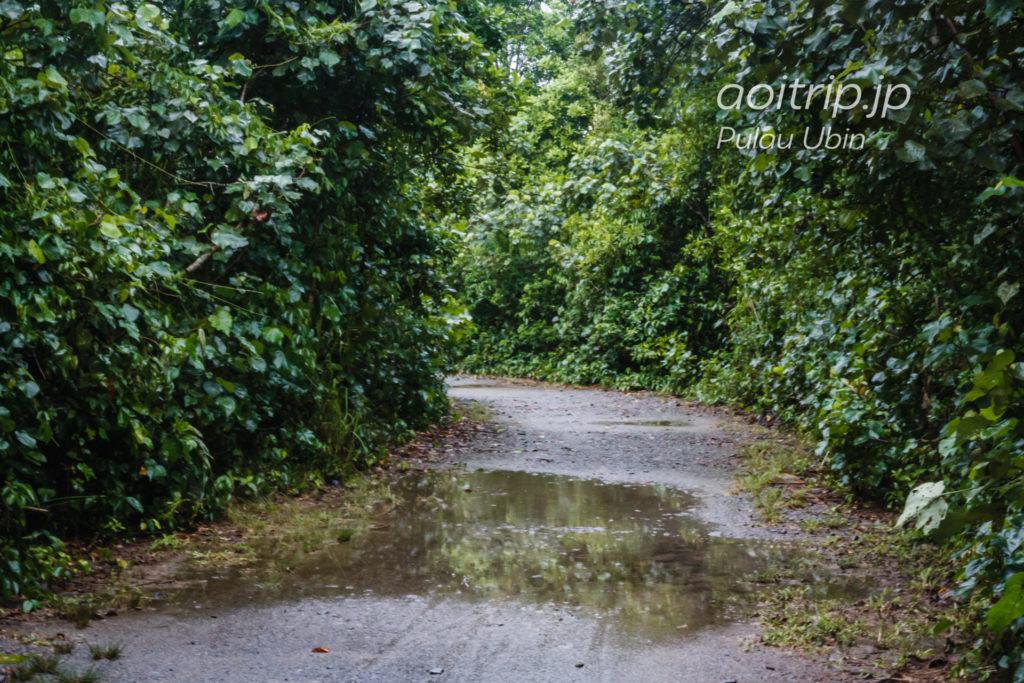 ウビン島サイクリング