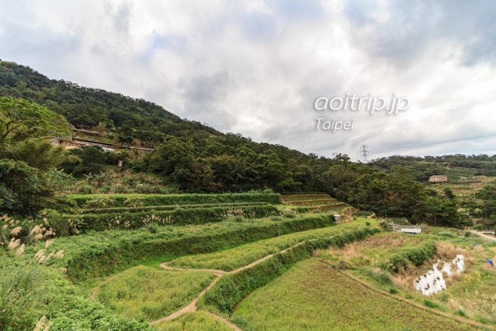 猫空の茶畑