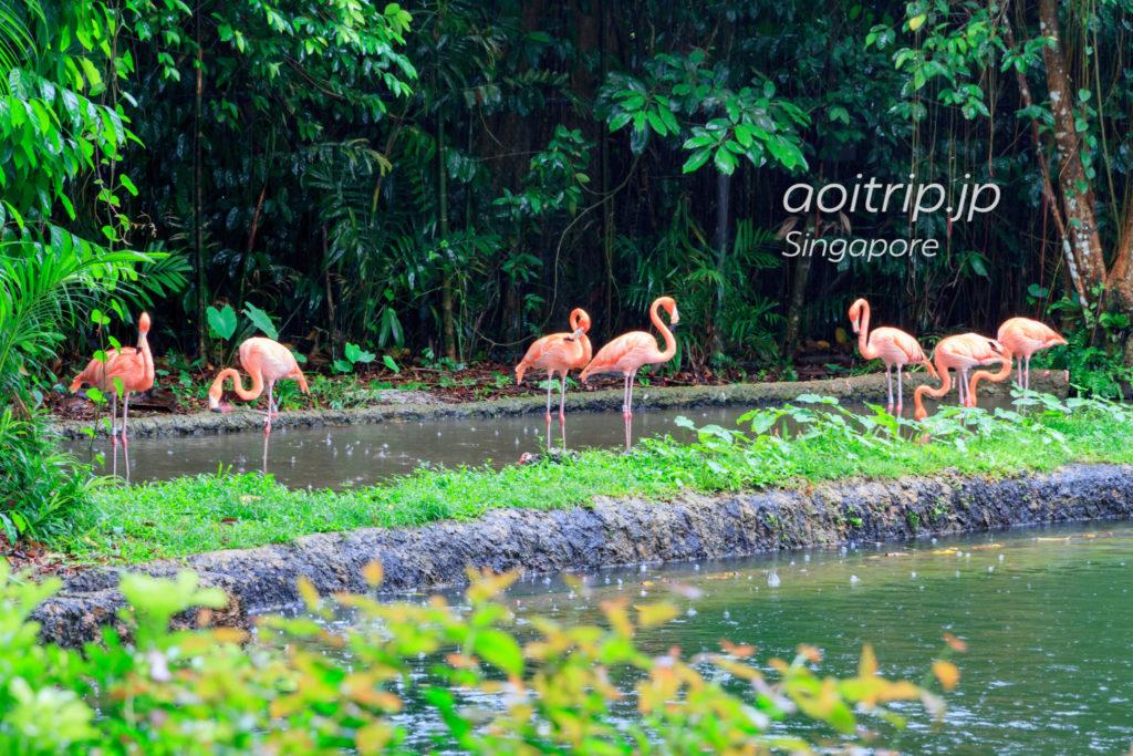 シンガポール動物園のフラミンゴ