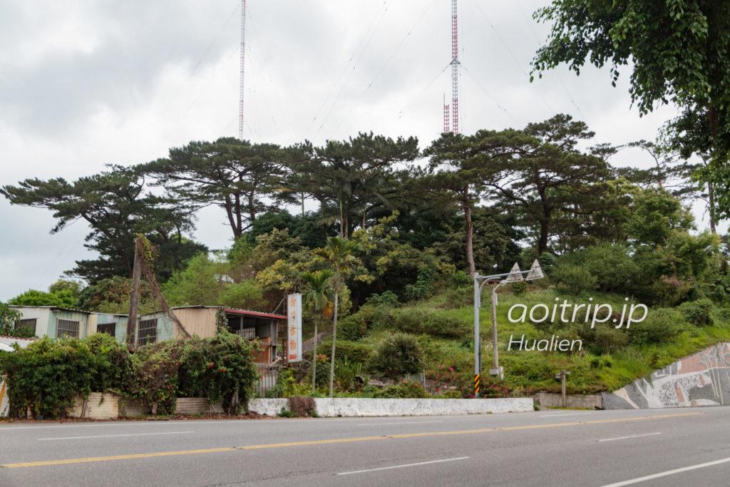 松園別館の松の木