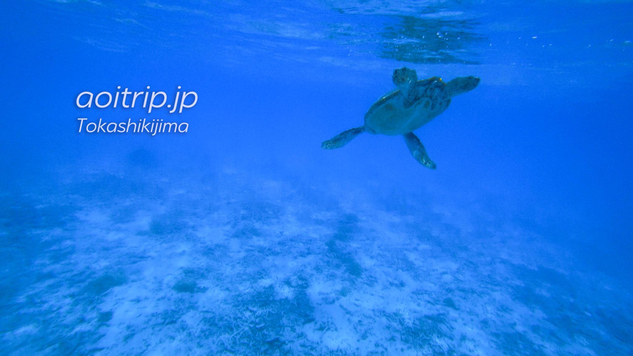 慶良間諸島・渡嘉敷島 とかしくビーチのウミガメ