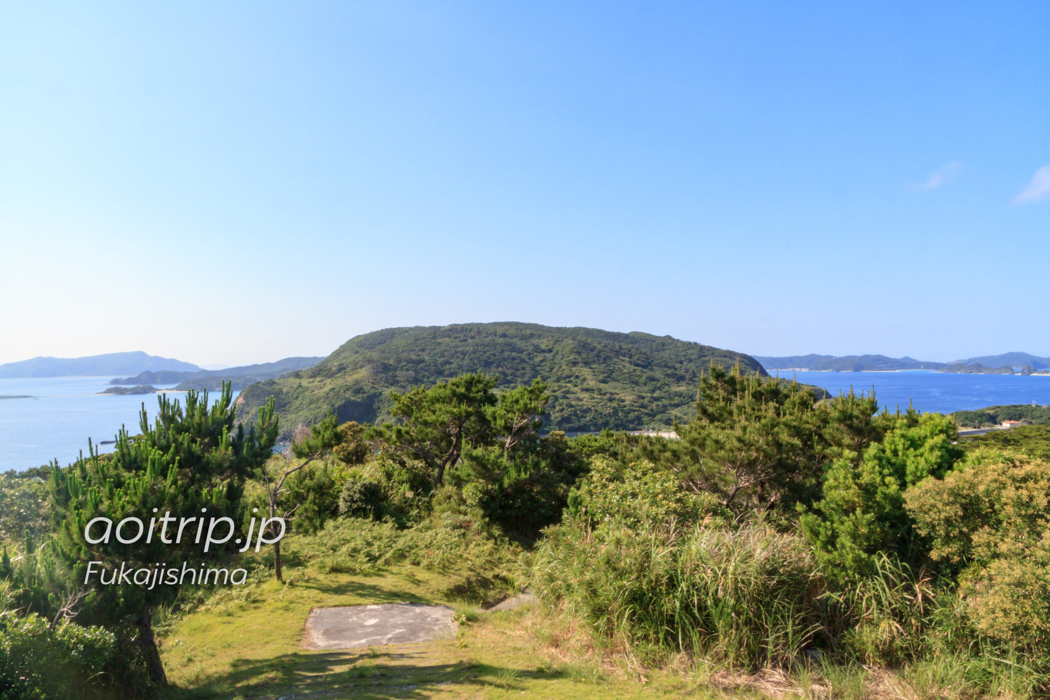 ケラマジカが生息する慶留間島の森