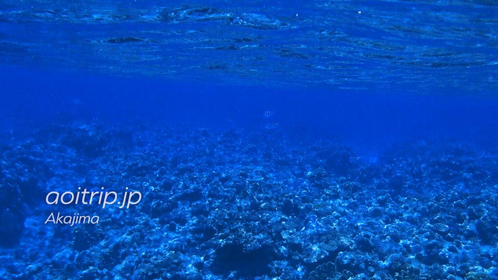 阿嘉島 北浜ビーチでシュノーケリング