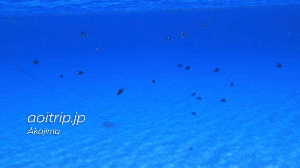 阿嘉島にある北浜ビーチ