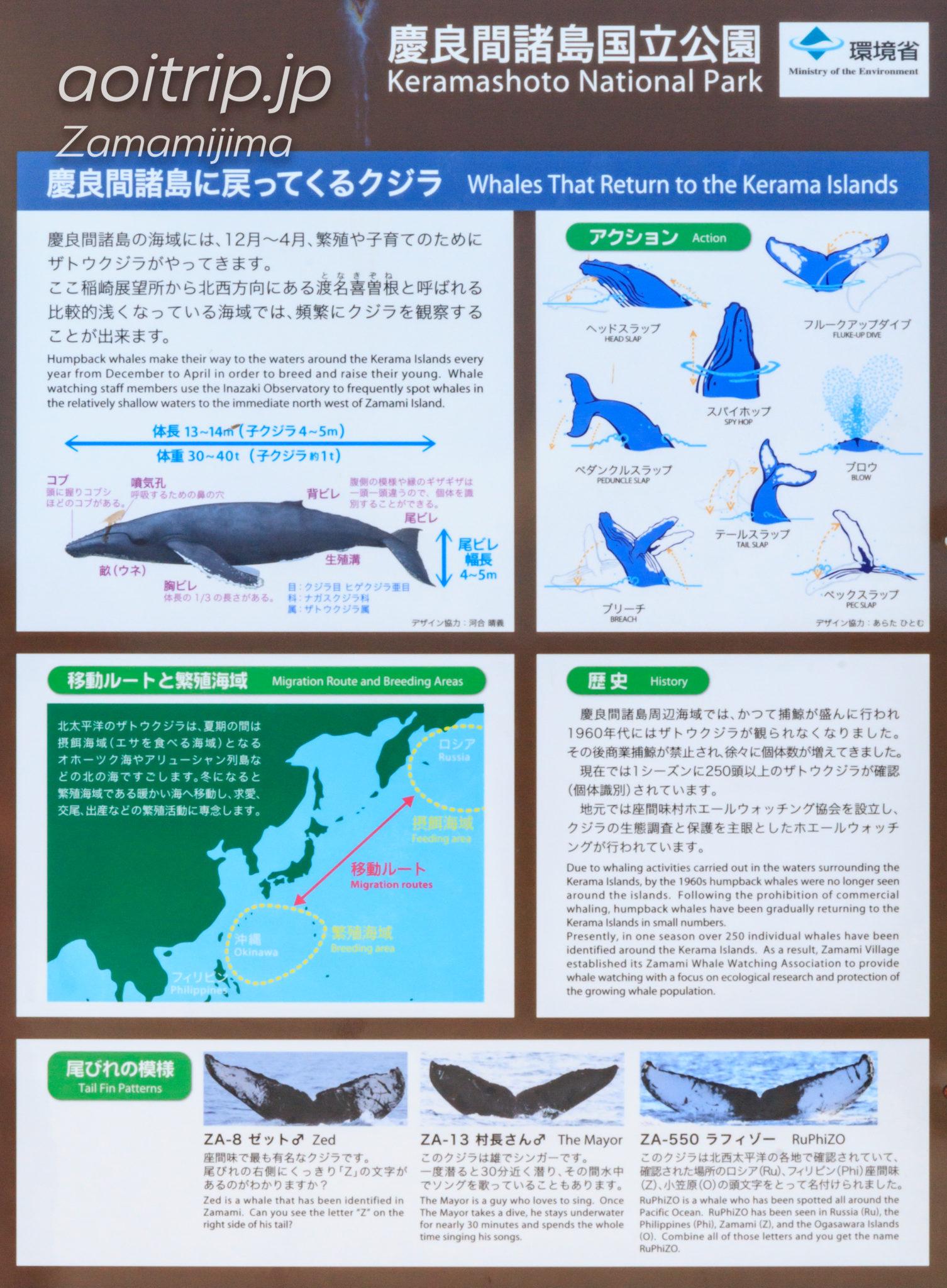 稲崎展望台にあるザトウクジラの説明パネル