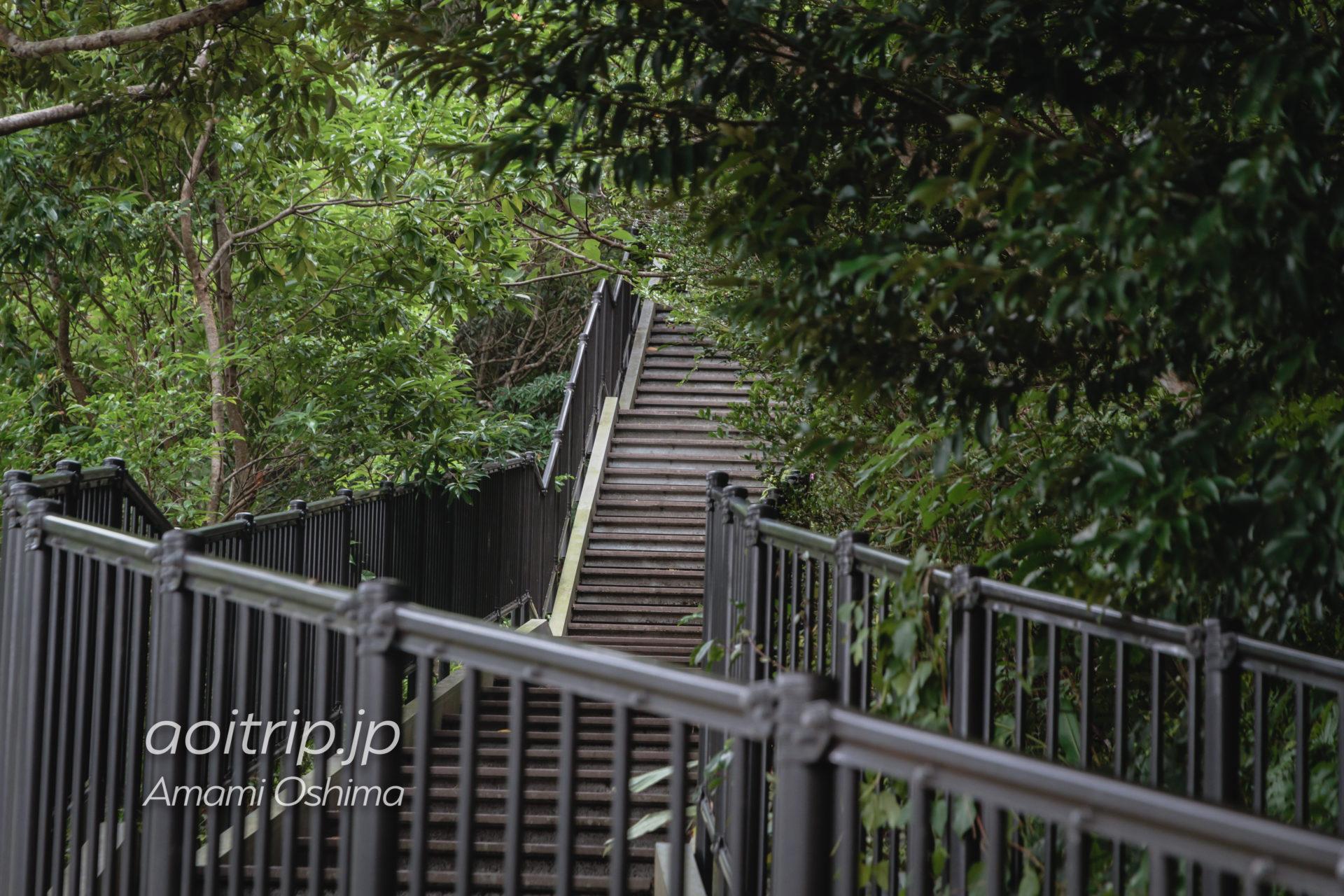 マングローブ展望台の入り口