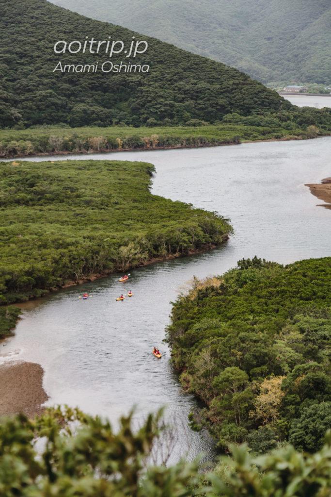 マングローブ展望台からのマングローブ原生林の眺望