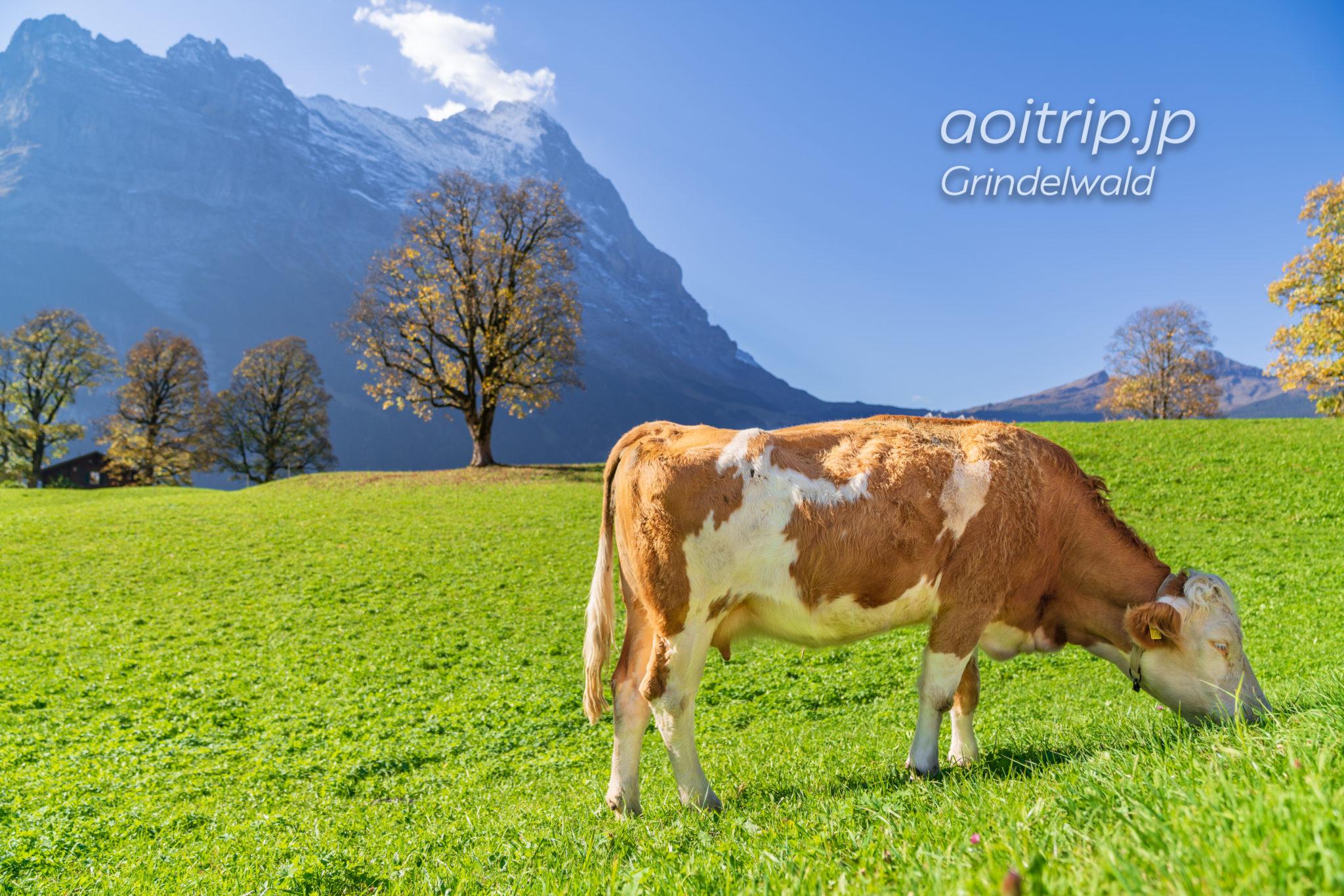 グリンデルワルト観光 Things To Do Grindelwald(スイス)