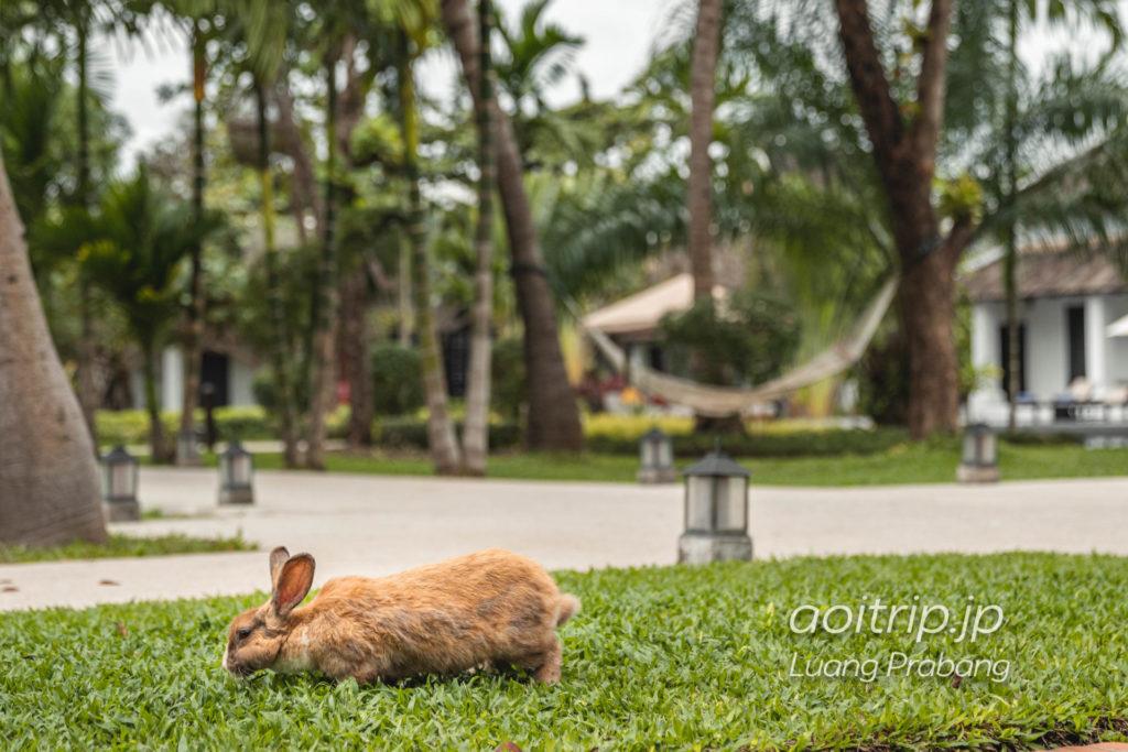 ソフィテル ルアンパバーンのウサギ