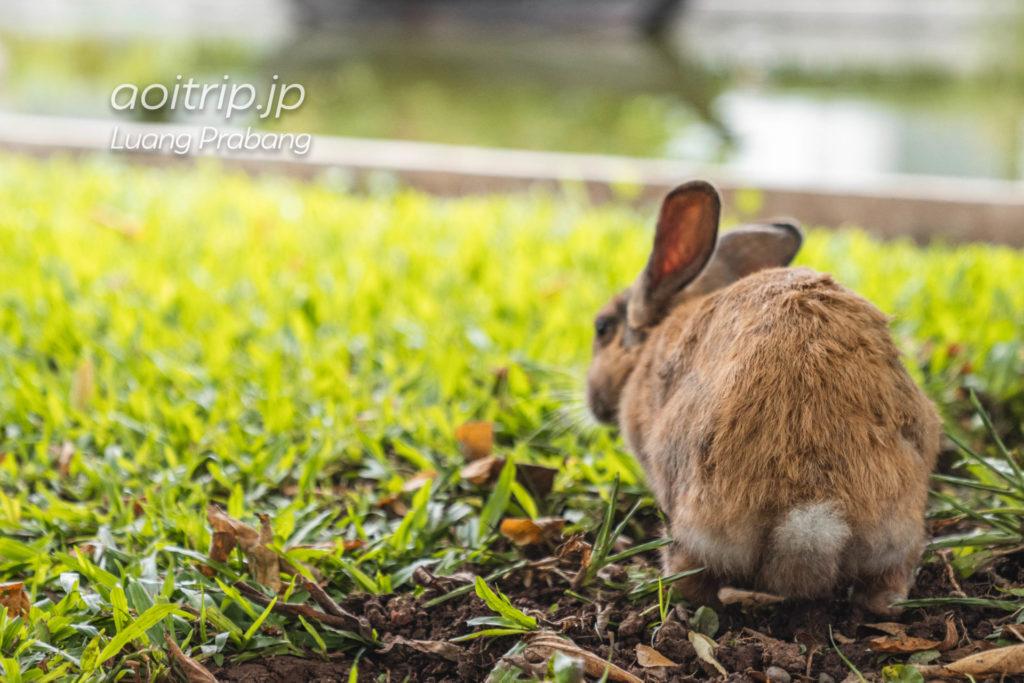 ソフィテルルアンパバーンのウサギ「マリー」