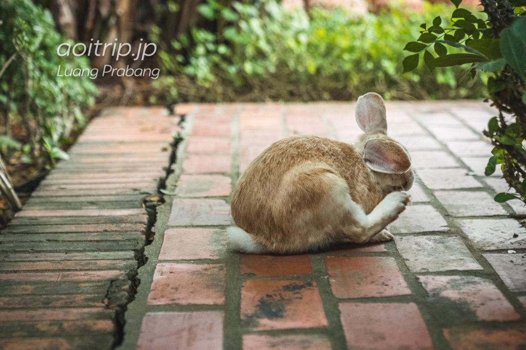 ソフィテルルアンパバーンのウサギ「マノー」