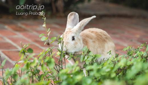 ルアンパバーンのウサギ親子(ソフィテル)|2 rabbits living in Sofitel Luang Prabang