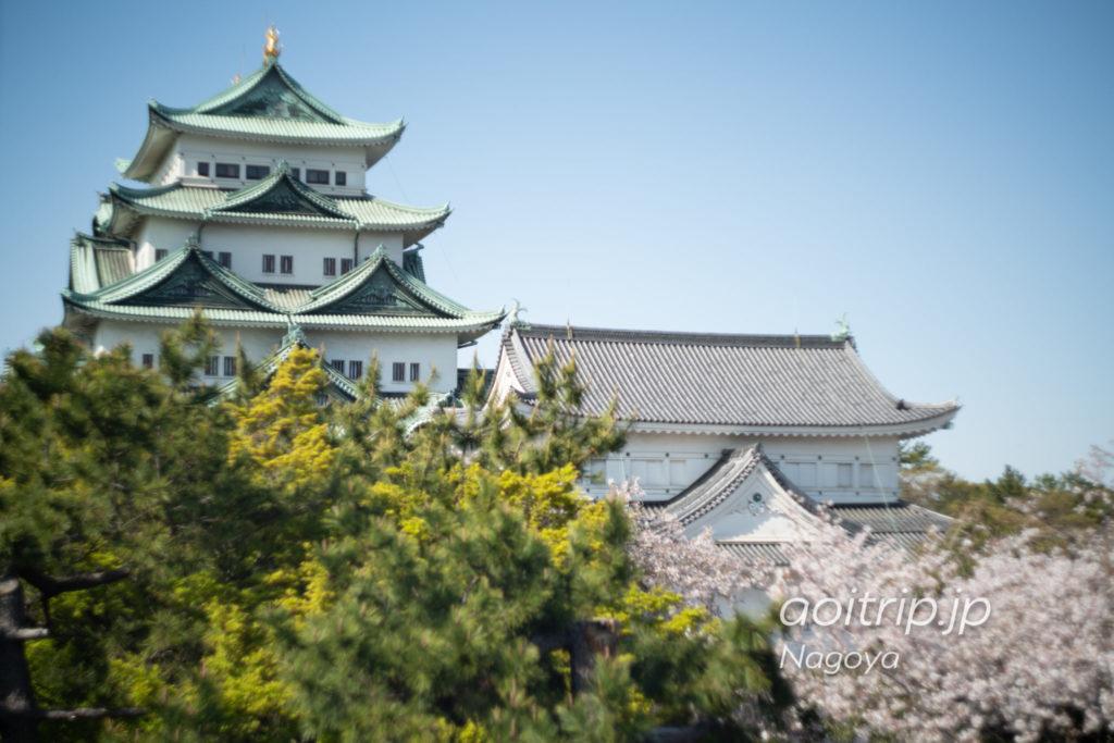 名古屋城の西南角櫓から望む天守と桜