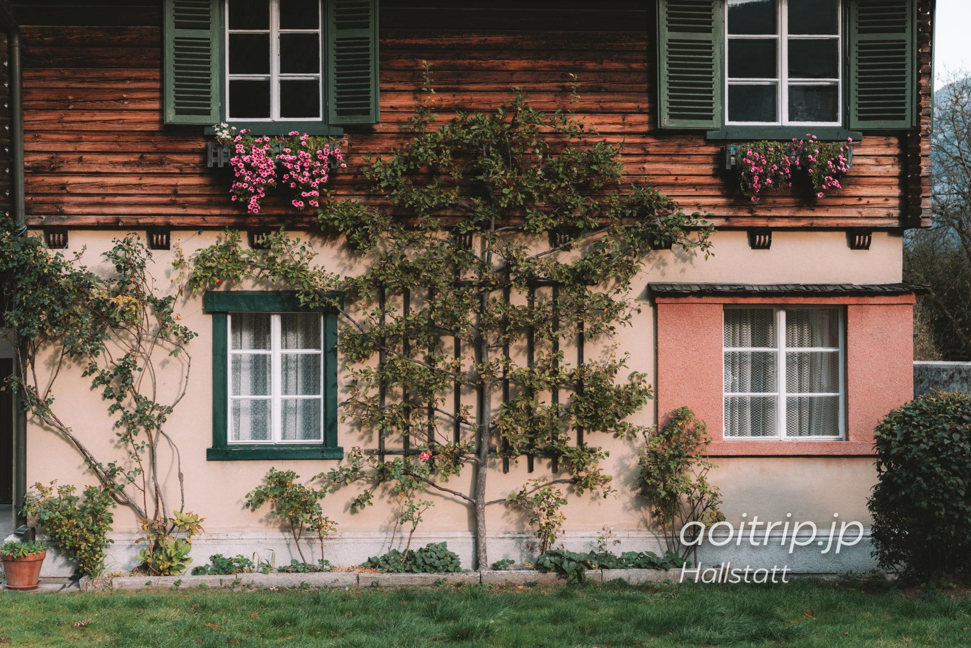 ハルシュタット住宅街の壁面緑化