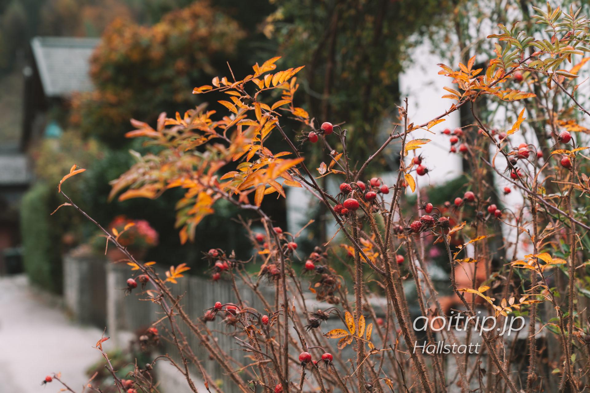 秋のハルシュタット