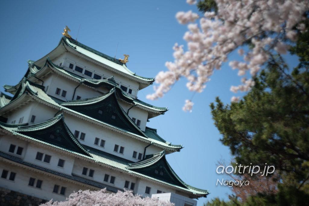 名古屋城 天守と桜
