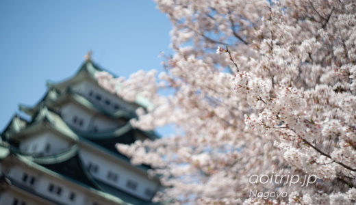 名古屋城の桜 Nagoya Castle Cherry blossoms