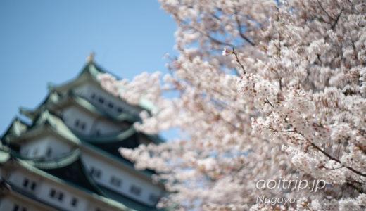 名古屋城の桜 Nagoya Castle Cherryblossoms