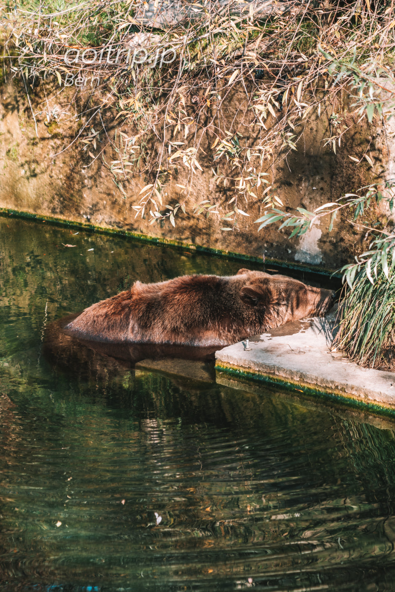 熊公園ベーレンパルク