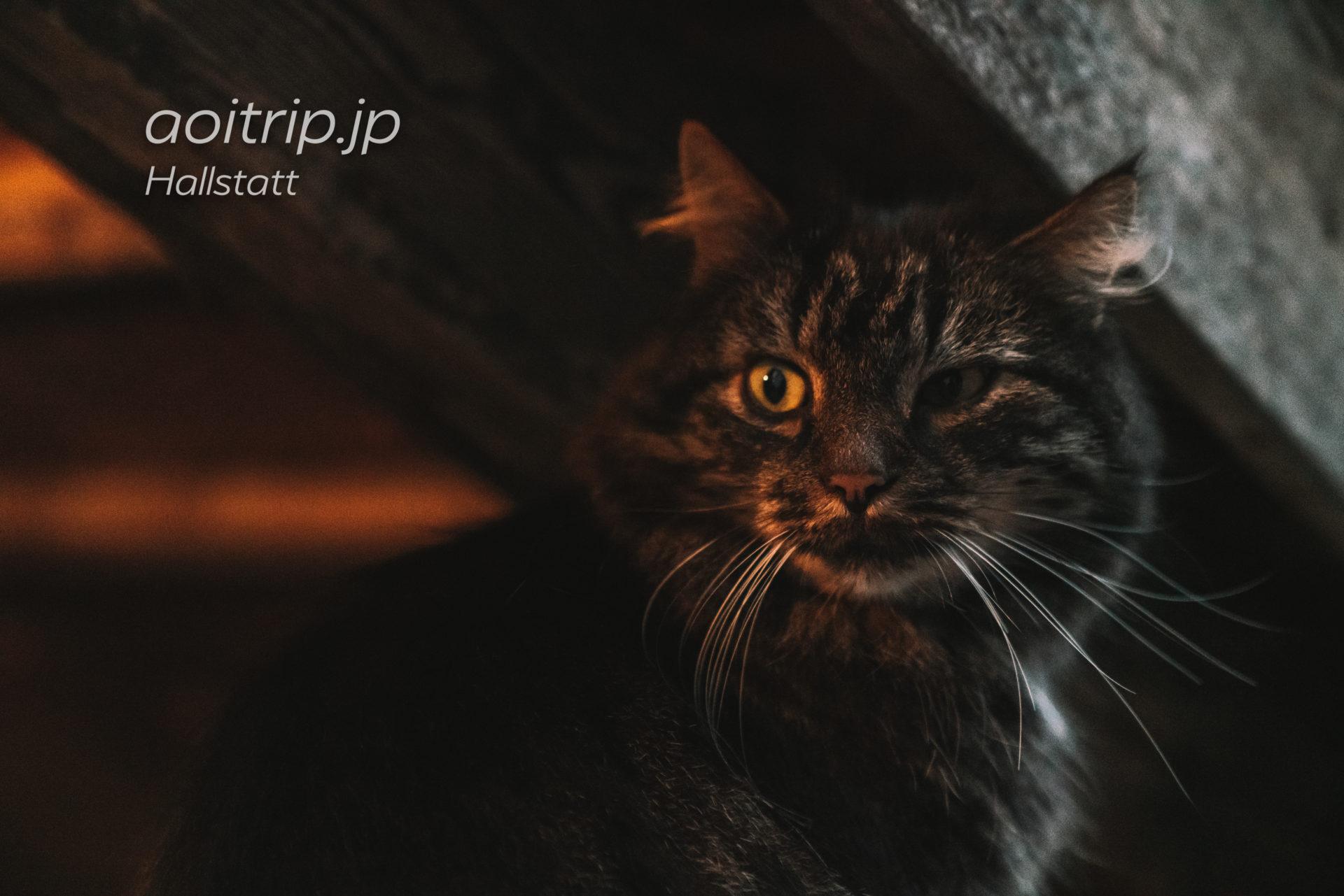 ハルシュタットのモフモフ猫