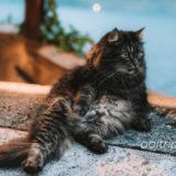ハルシュタットで出会ったモフモフ猫