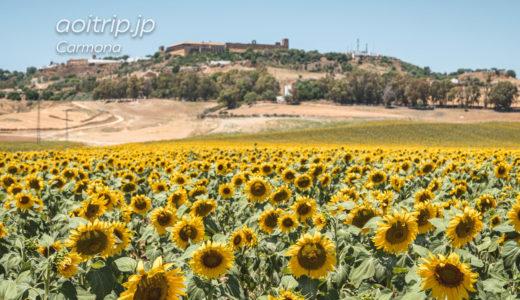 カルモナのひまわり畑を目指して(スペイン)