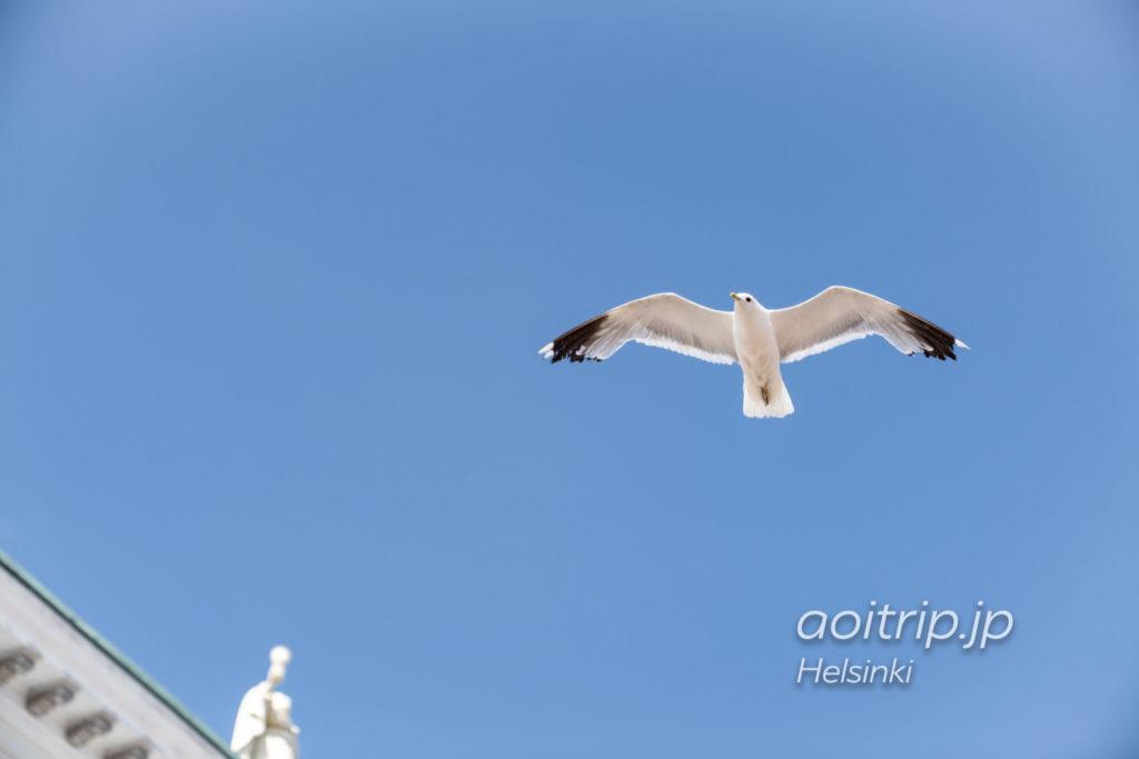 ヘルシンキ大聖堂の上空を飛ぶカモメ