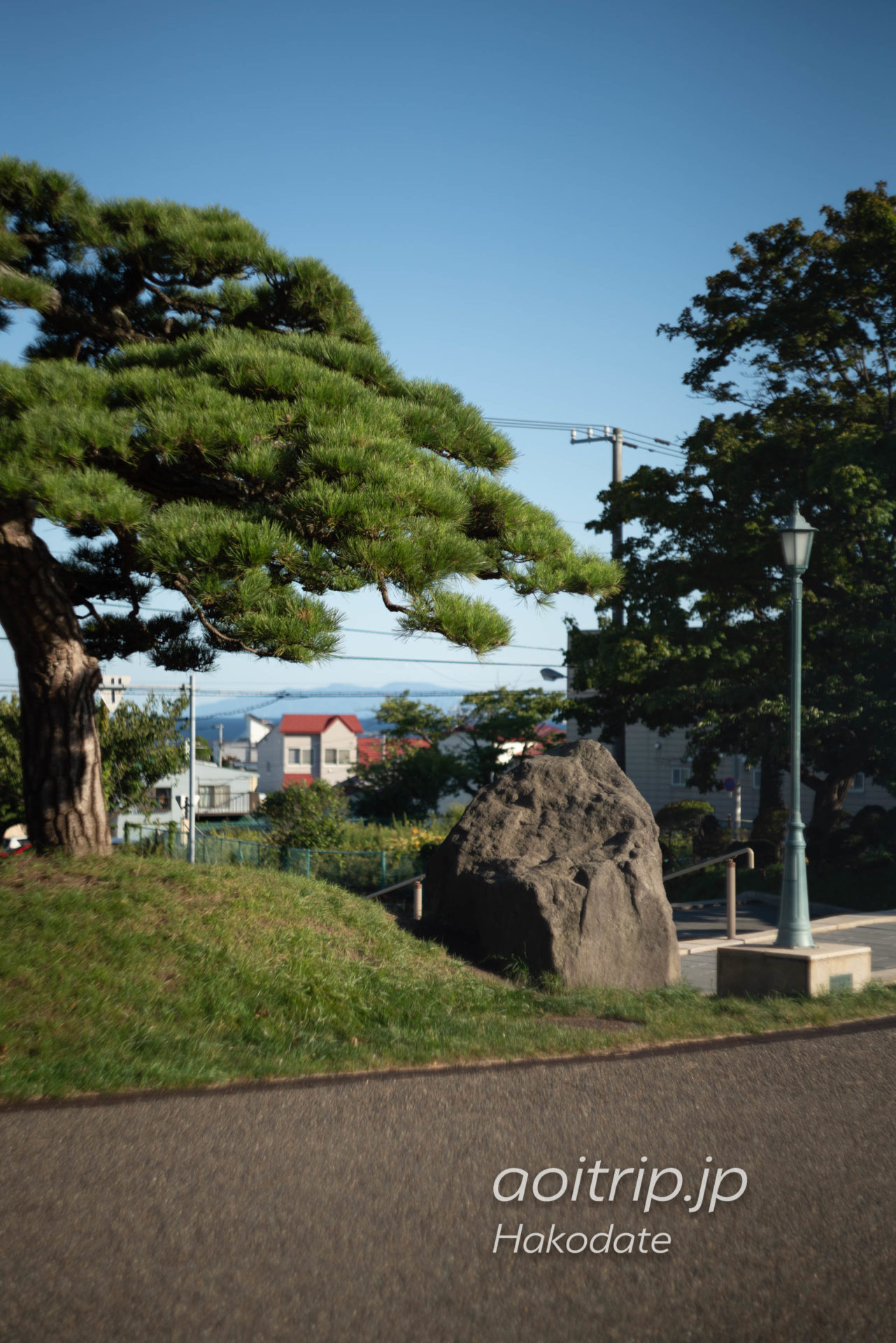 函館公園 高田屋の松