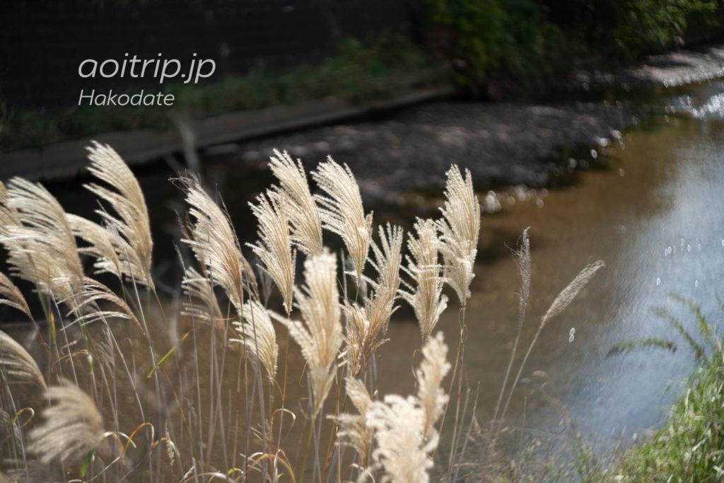 湯の川温泉 鮫川