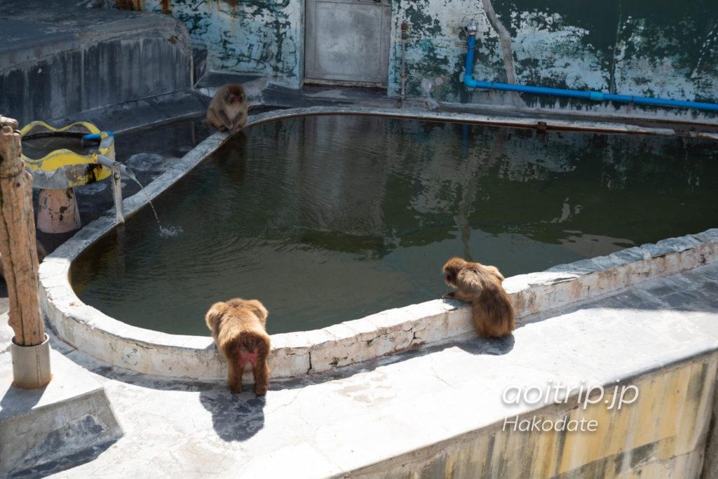 函館市熱帯植物園 猿園