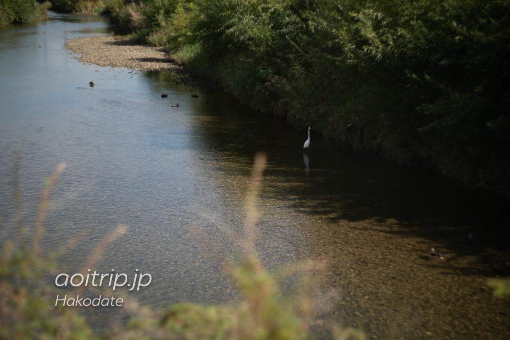 湯の川温泉 湯の川沿い