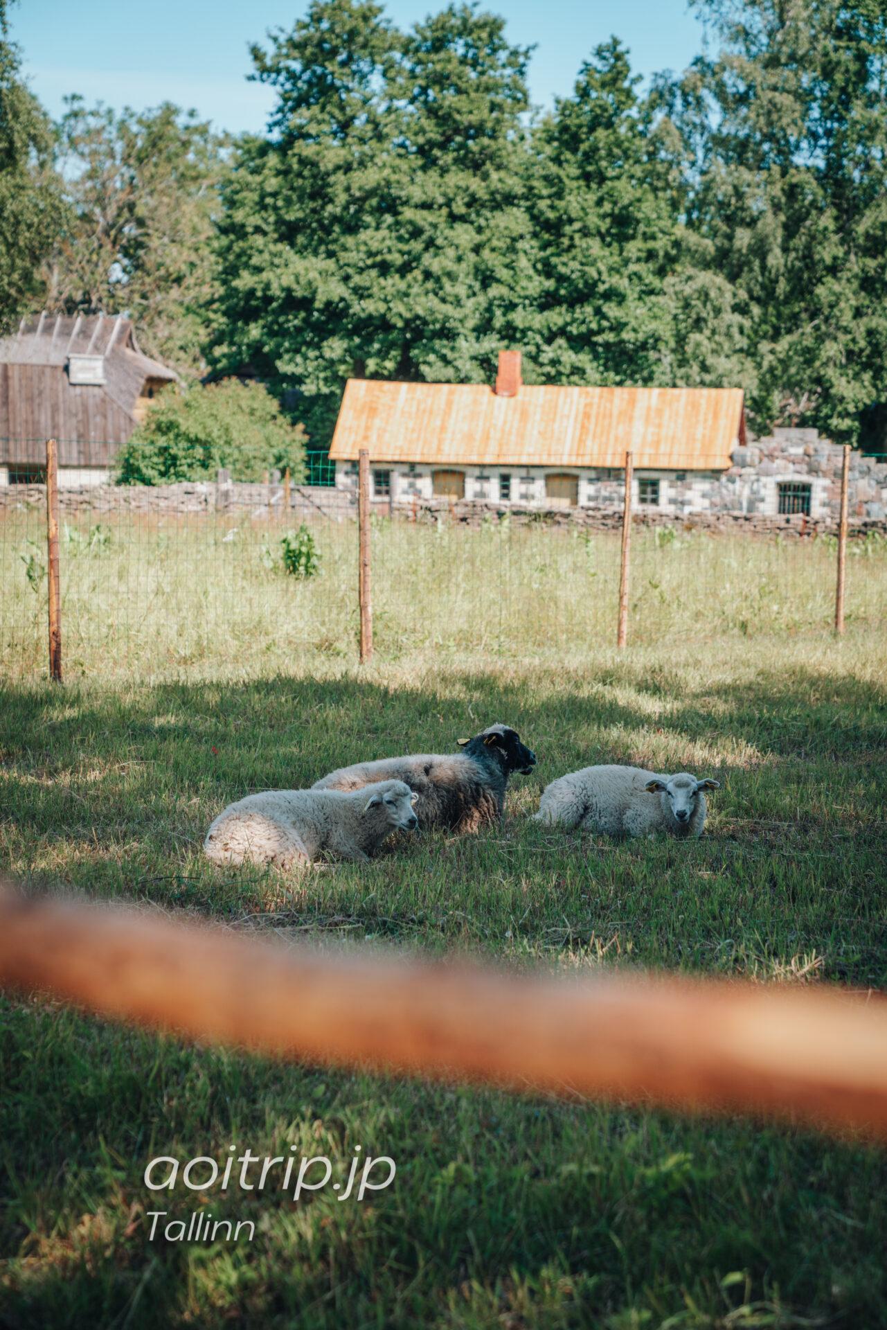 エストニア民族野外博物館(Estonian Open Air Museum)の羊