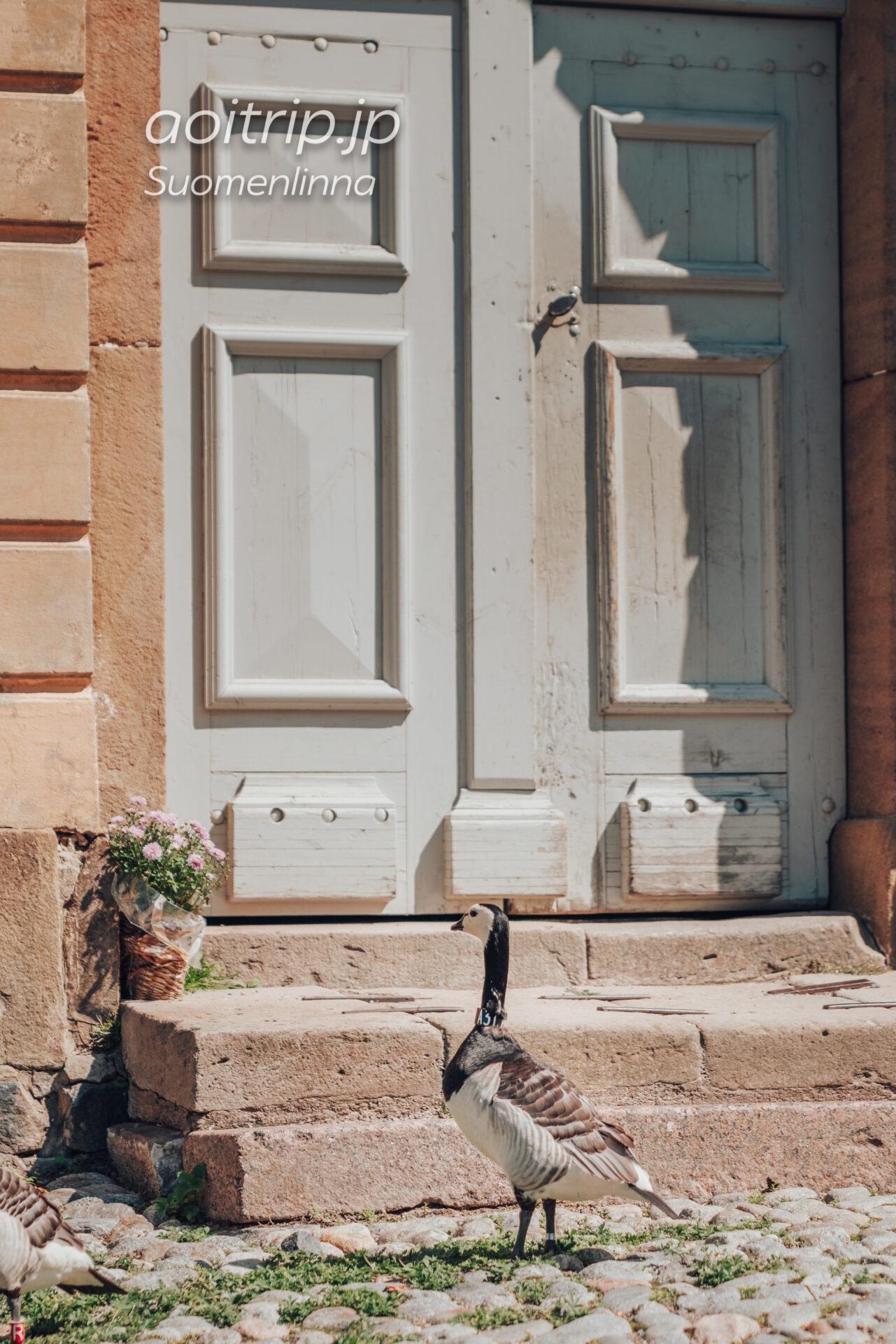 スオメンリンナのカオジロガン
