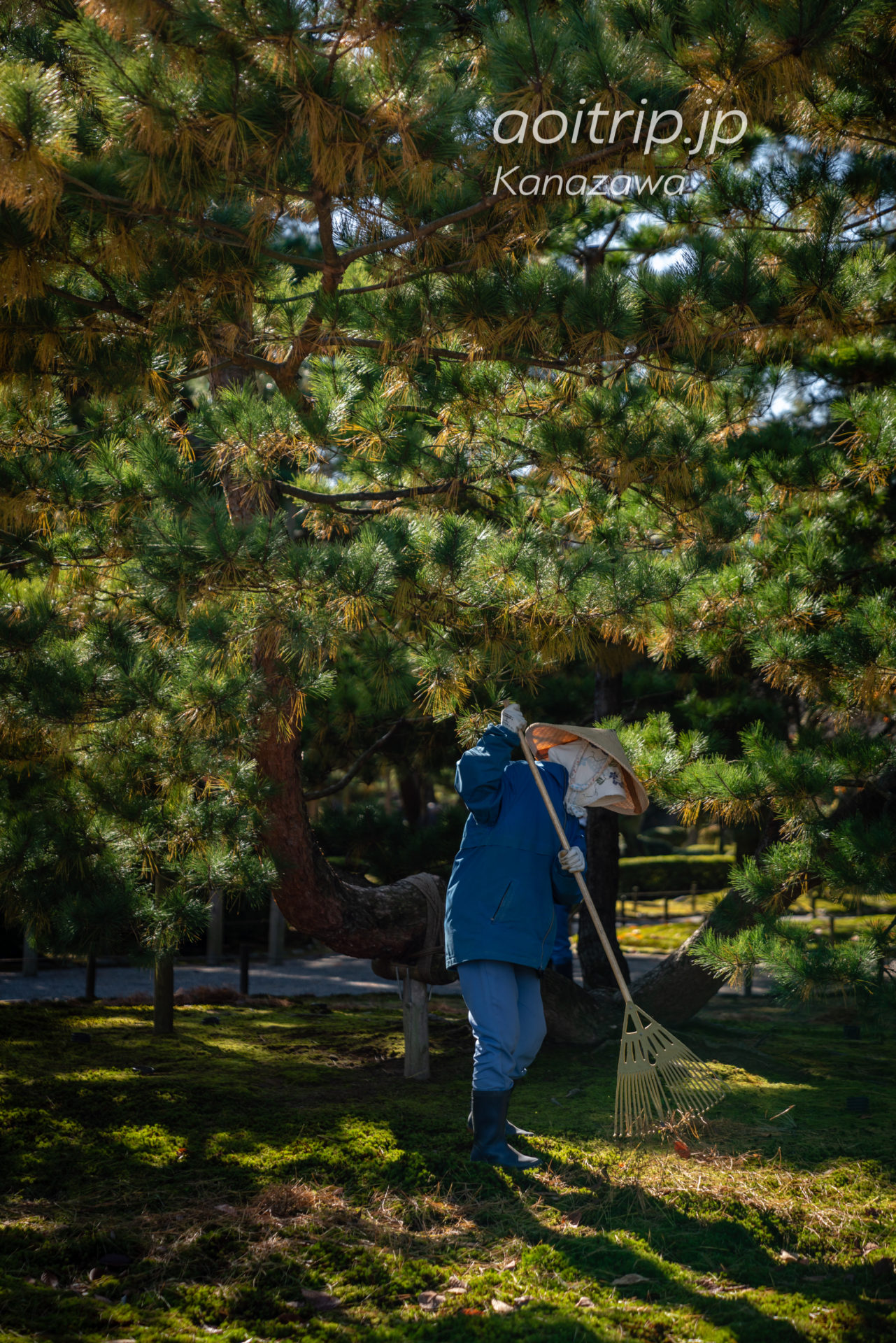 秋の金沢 兼六園 紅葉 Kanazawa Kenrokuen Garden in Autumn