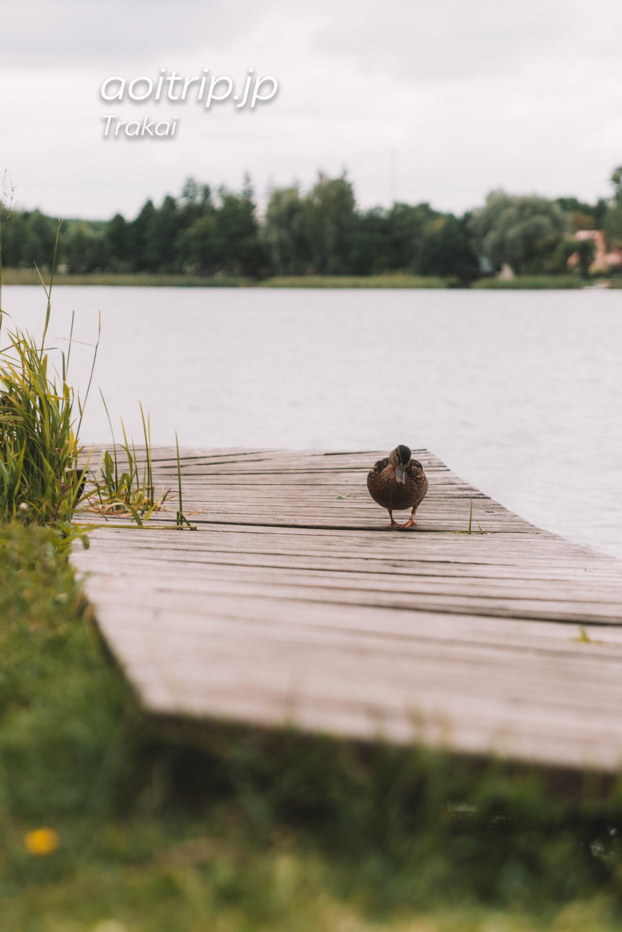 リトアニアのトゥラカイ Totoriškių ežeras(トトリシキュウ湖)