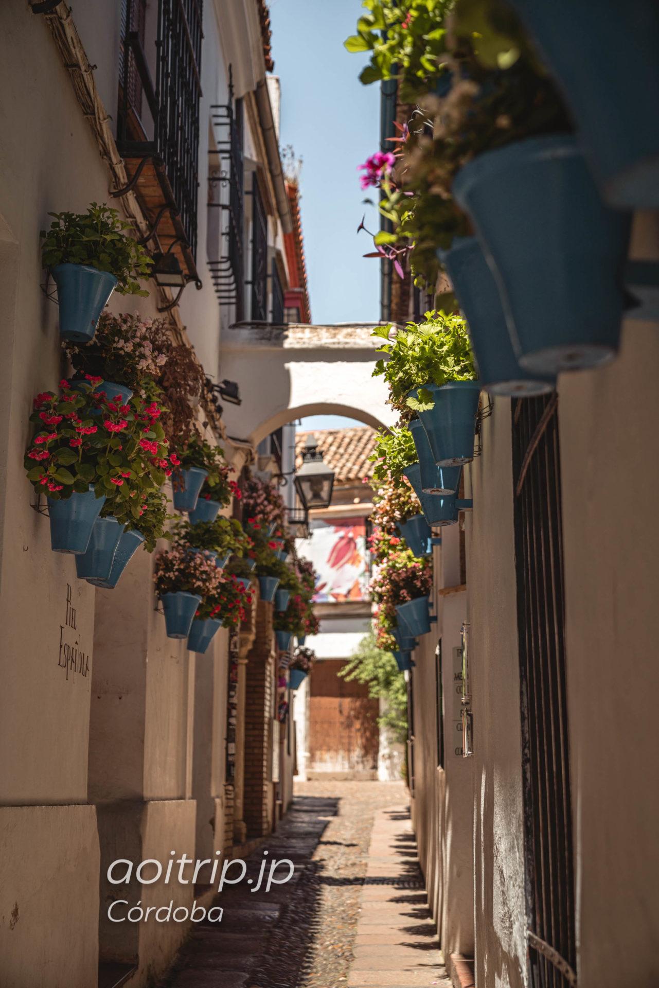 コルドバ 花の小道