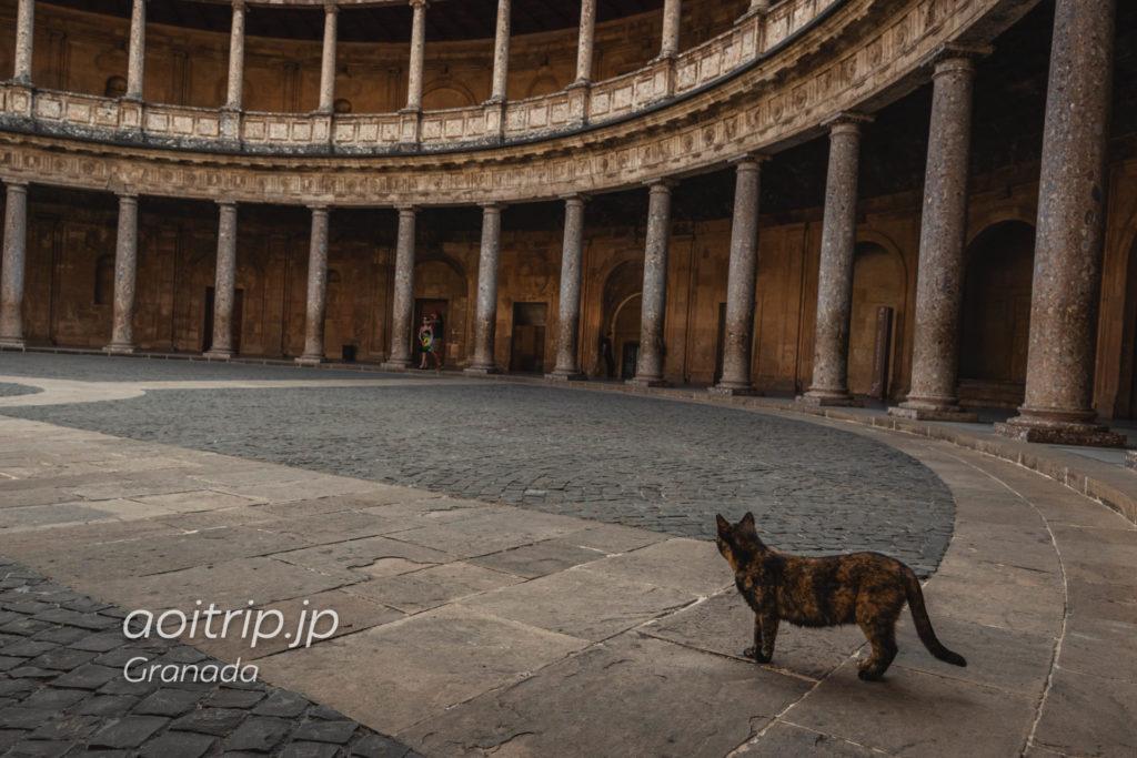 グラナダ アルハンブラ宮殿で出逢った猫ちゃん