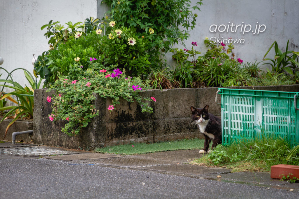 岩合さんの頭の上に乗った猫に会いたくて、沖縄県本部町